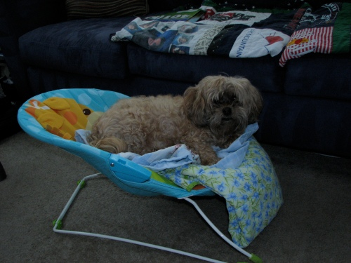 Benji thought he'd check out the bouncy chair...
